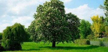 Grundstück Baum